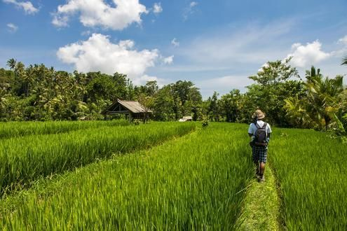 Country Walk with a Balinese Priest